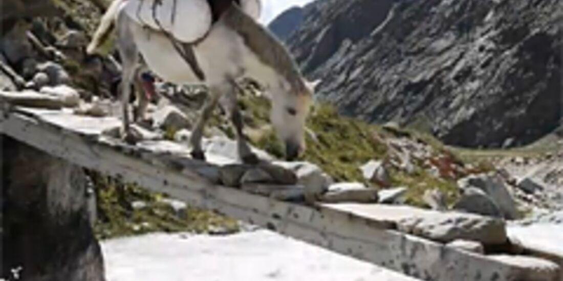 KL Pferd mit Crashpad im Gepäck