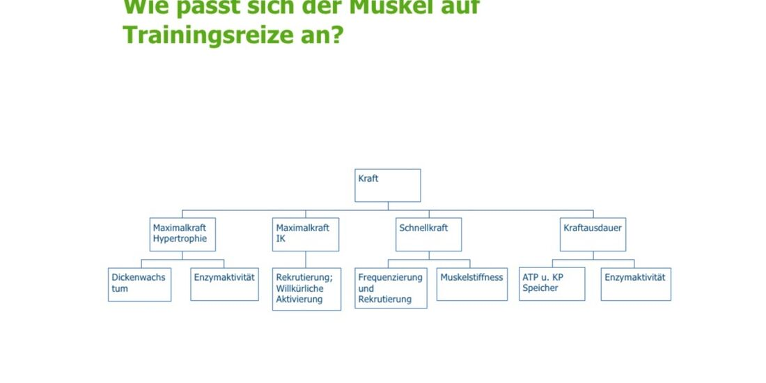 kl-klettertraining-trainings-periodisierung-koestermeyer-muskel-trainingsreize-slide-4 (jpg)